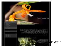 Ranking Webseite orchideenzauber.de